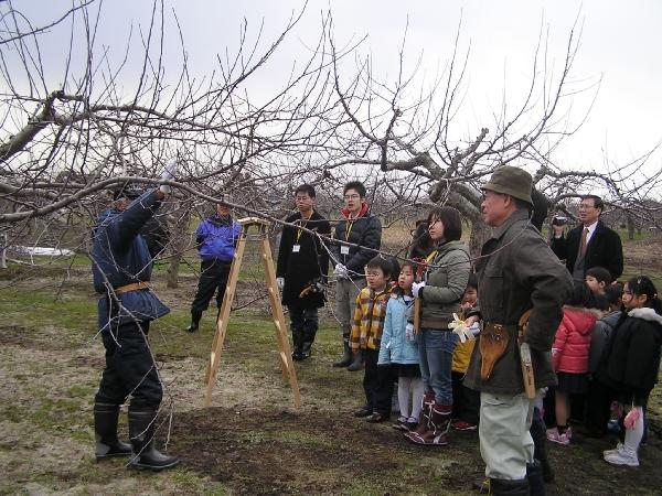 林檎の樹のオーナーを募集しています