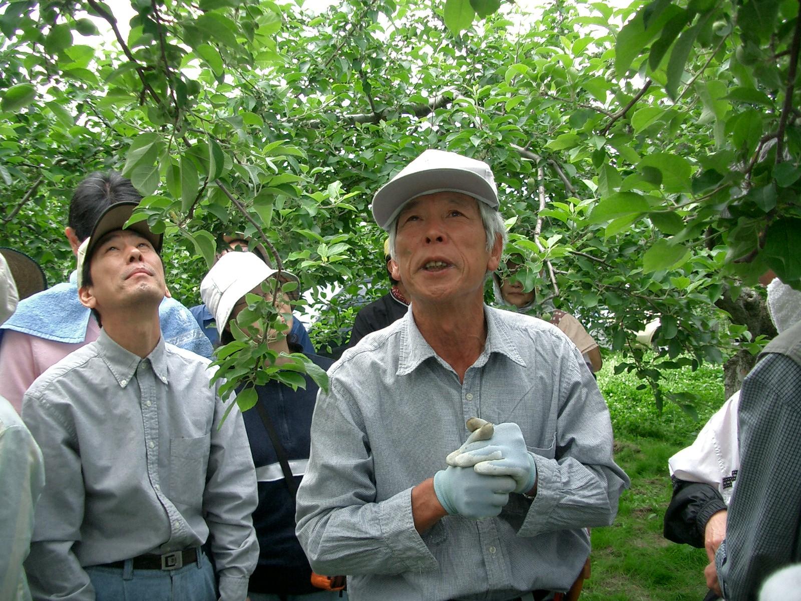 【梅田NPOりんご園】摘果作業のようす