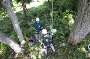 インストラクターの指導で安全な木登りです。