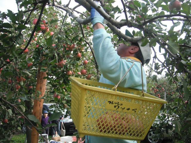 NPOりんご園収穫祭!