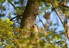<!--:ja-->【SAVE JAPANプロジェクト】つがる野もりびと部-動物のすむ森を守ろう!-<!--:-->