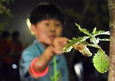 【SAVE JAPANプロジェクト】子ども・親子講座 セミの羽化鑑賞会